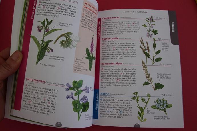 Les plantes dans le guide nature A la Campagne