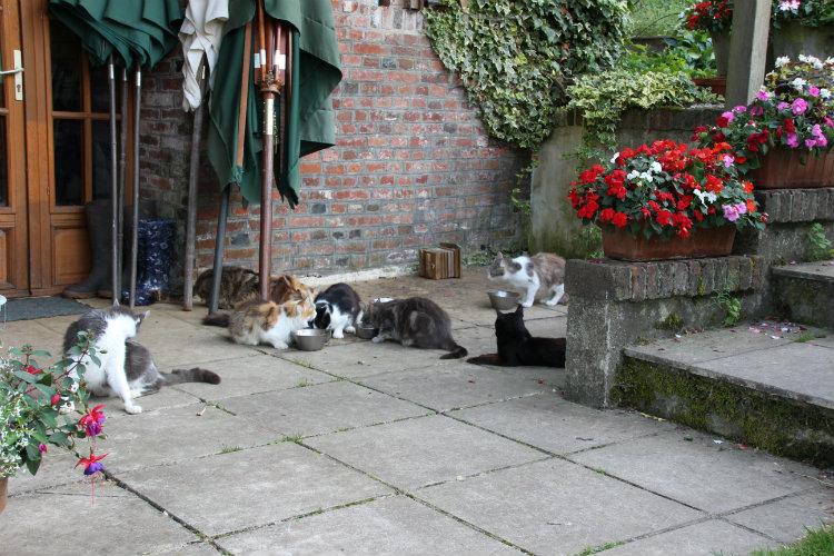Chats à la maison du vert