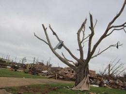 Wood Manor neighborhood 2011. Metal wrapped in tree