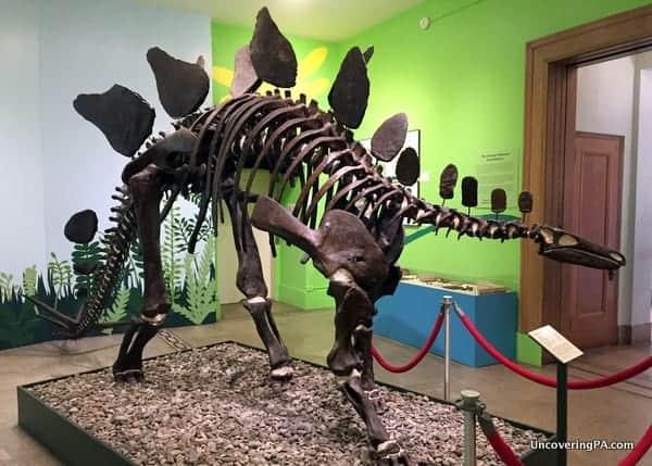 Everhart Museum Dinosaur Fossil