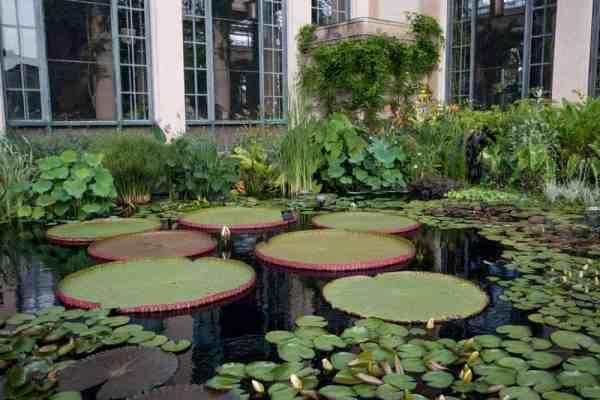 Interesting Plants at Longwood Gardens in Kennett Square, Pennsylvania