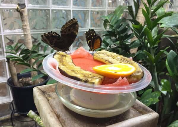 Butterflies at the Academy of Natural Sciences in Philadelphia, Pennsylvania
