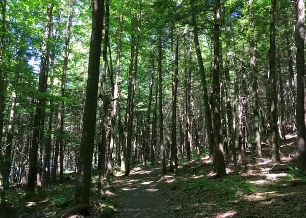 Hiking at Mount Pisgah State Park in Bradford County, PA