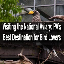 Visiting the National Aviary in Pittsburgh, PA