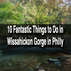 Things to do in Wissahickon Gorge in Philadelphia