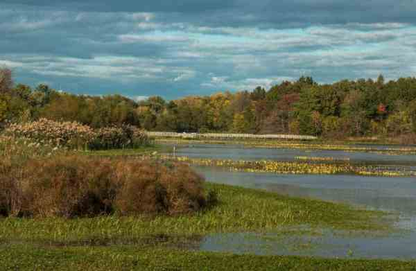 What to see at the John Heinz National Wildlife Refuge in Philadelphia, Pennsylvania.