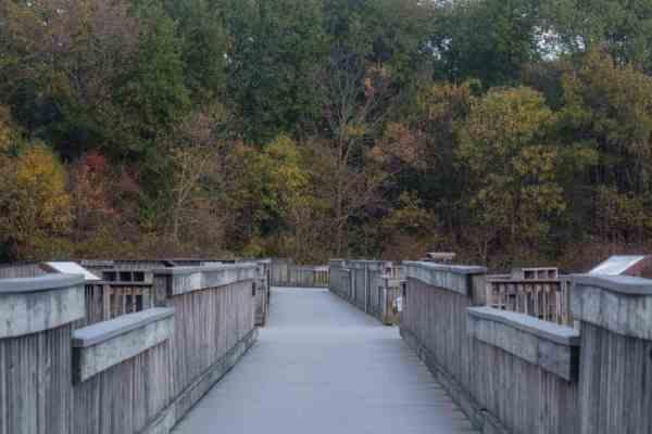 Boardwalk at the John Heinz National Wildlife Refuge in Philadelphia, Pennsylvania.