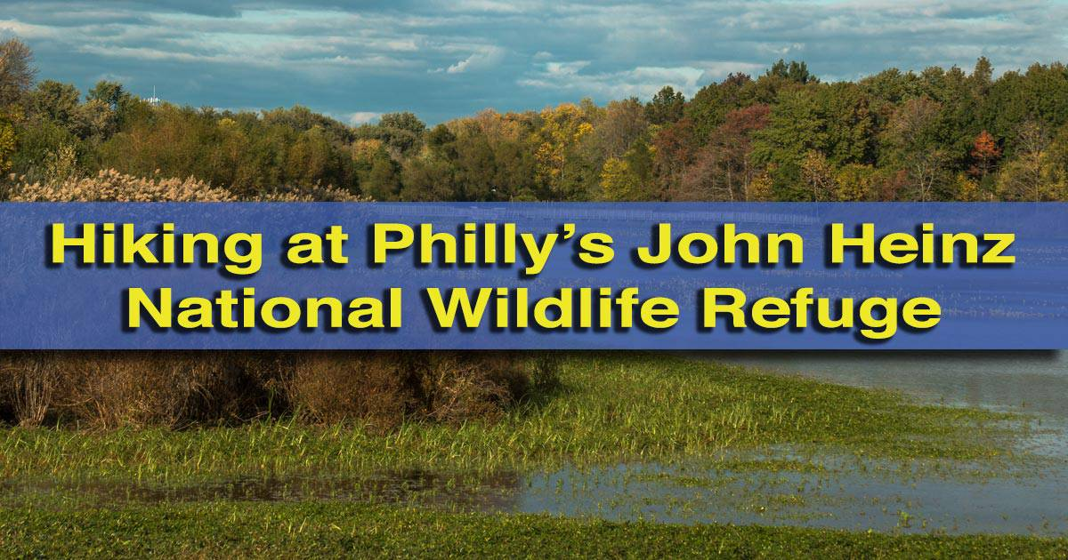 Hiking in the John Heinz National Wildlife Refuge in Philadelphia, Pennsylvania