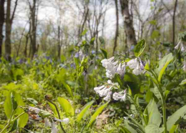 Wildflower Preserve in Raccoon Creek State Park near Pittsburgh, Pennsylvania
