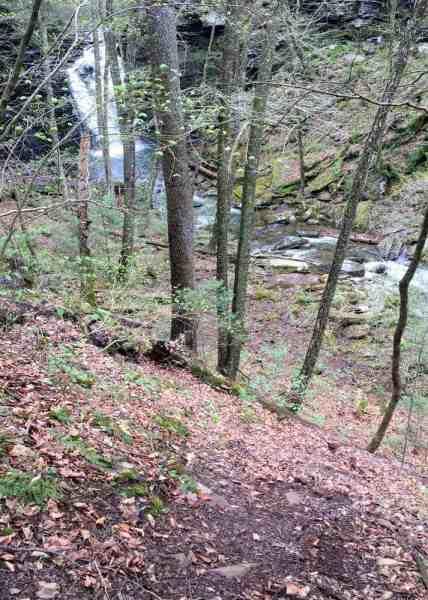 Trail to Big Falls near Jamison City, PA