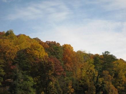 Asheville foliage