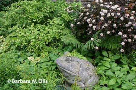 Shrubs,-perennials,-ground-