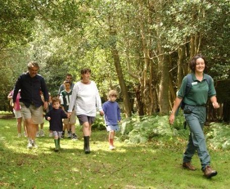 A walking tour in the New Forest