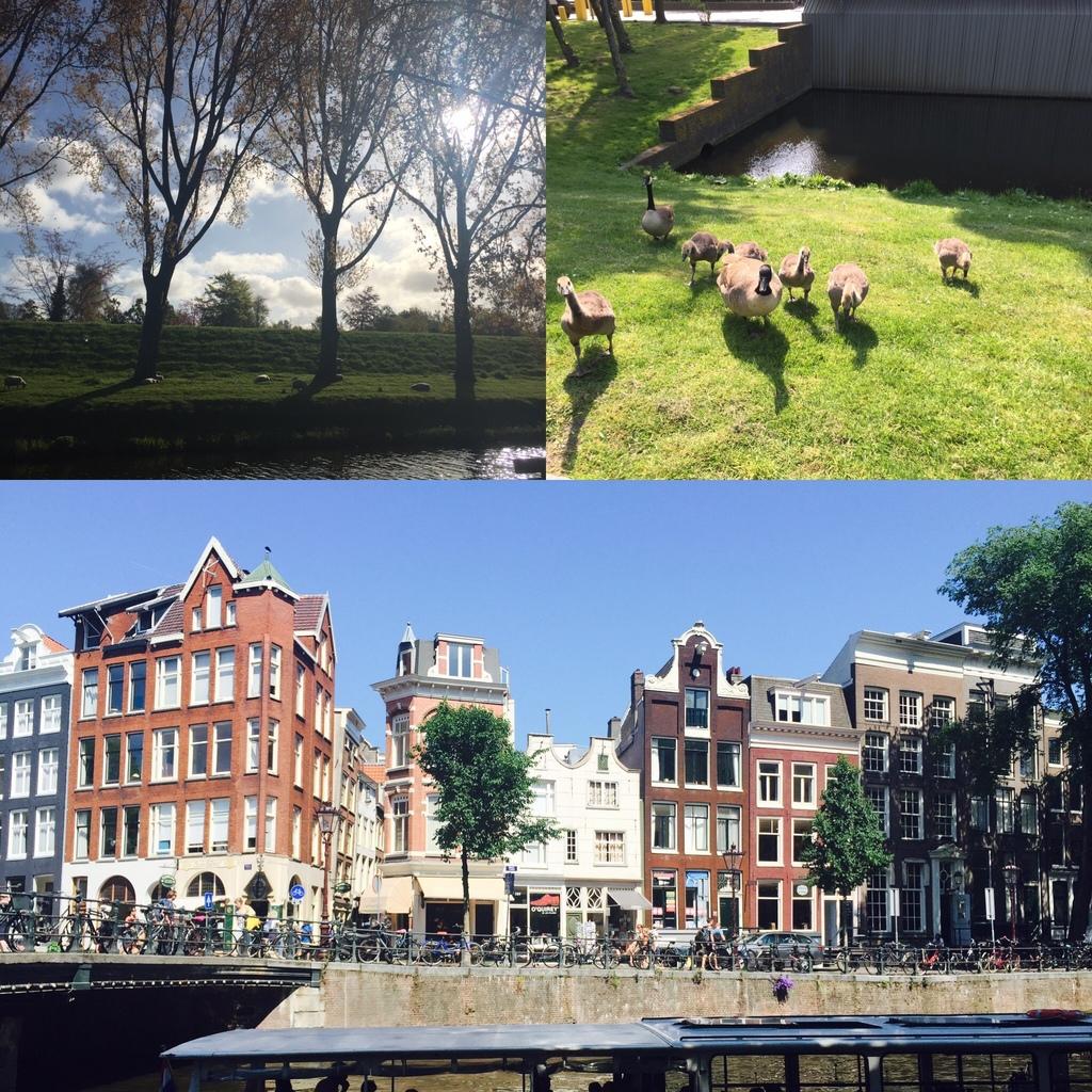 荷蘭實用網站及App,讓你旅行及生活一把罩