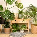 Wo Stelle Ich Welche Zimmerpflanze Auf Undergreen De