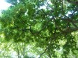 awesome branching