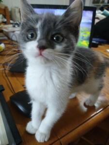 Misdemeanor the kitten