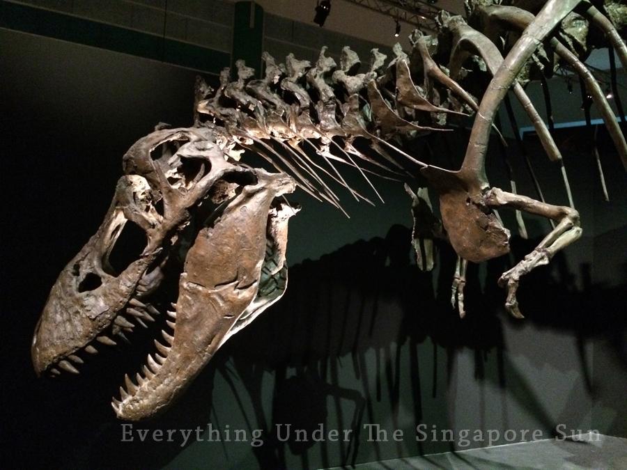 dinosaurs-science-center- (9)
