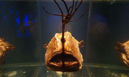 Going Deep (ArtScience Museum Exhibit)
