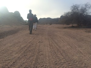 Tracking lionesses
