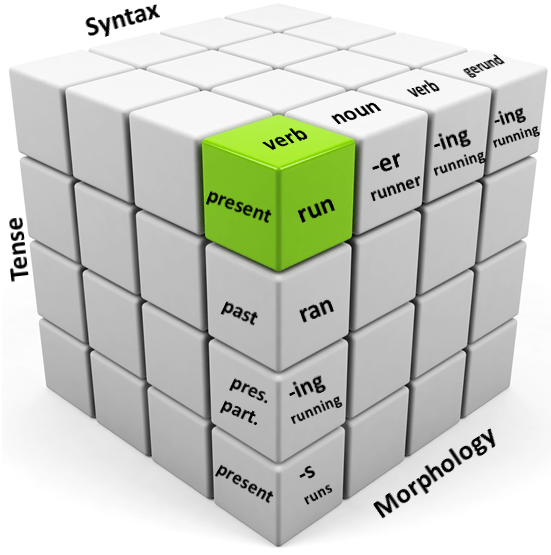 Syntax Morphology Tense