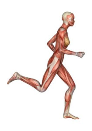Muscles Human Female Running