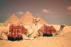 camels-pyramids-egypt