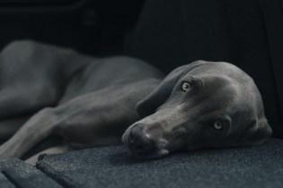 dog-1031058_1920