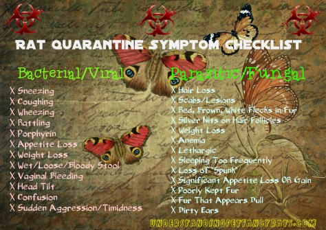 pet rat quarantine illness symptom checklist