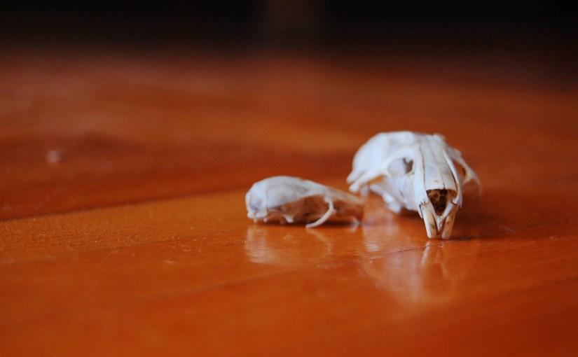 Do Rats Have Bones?