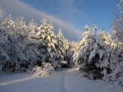 winter forest in Russia web