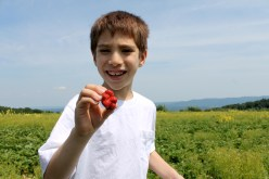 Andres_Strawberries_Lawrence Farms