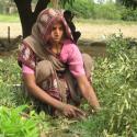 women tending to crops in the field