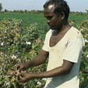 man in farm field inspecting crops