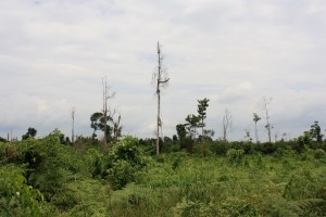 Rainforest logging in Borneo has been extensive over the last several decades.