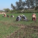 Feeding India: Back to the Farm