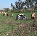 Women working in a field in India.