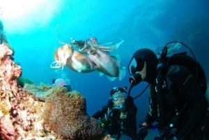 diving 689831 1920 300x201 - Dykkerdragt