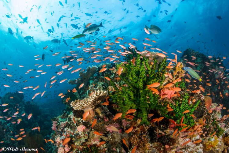 Reef at Verde Island