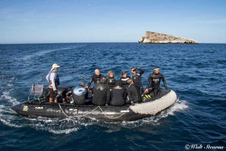 All dives from the Galapagos Sky are conducted as drifts staged from a pair of 22-foot inflatable launches.
