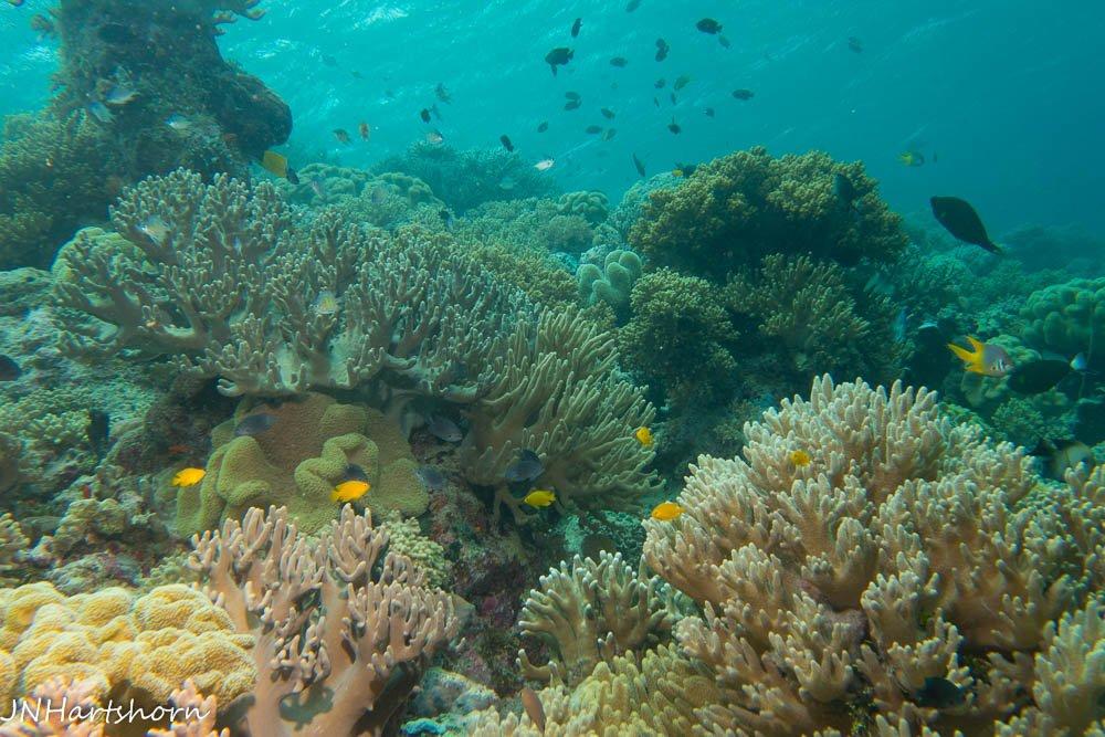 shallow coral gardens