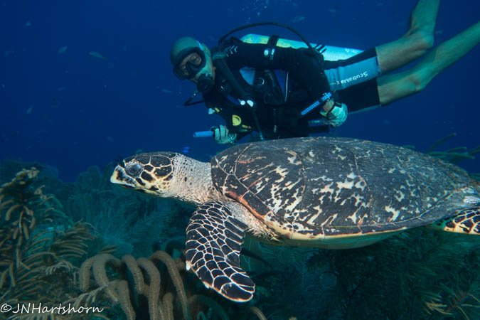 Incredible Diving at Glover's Reef, Belize!