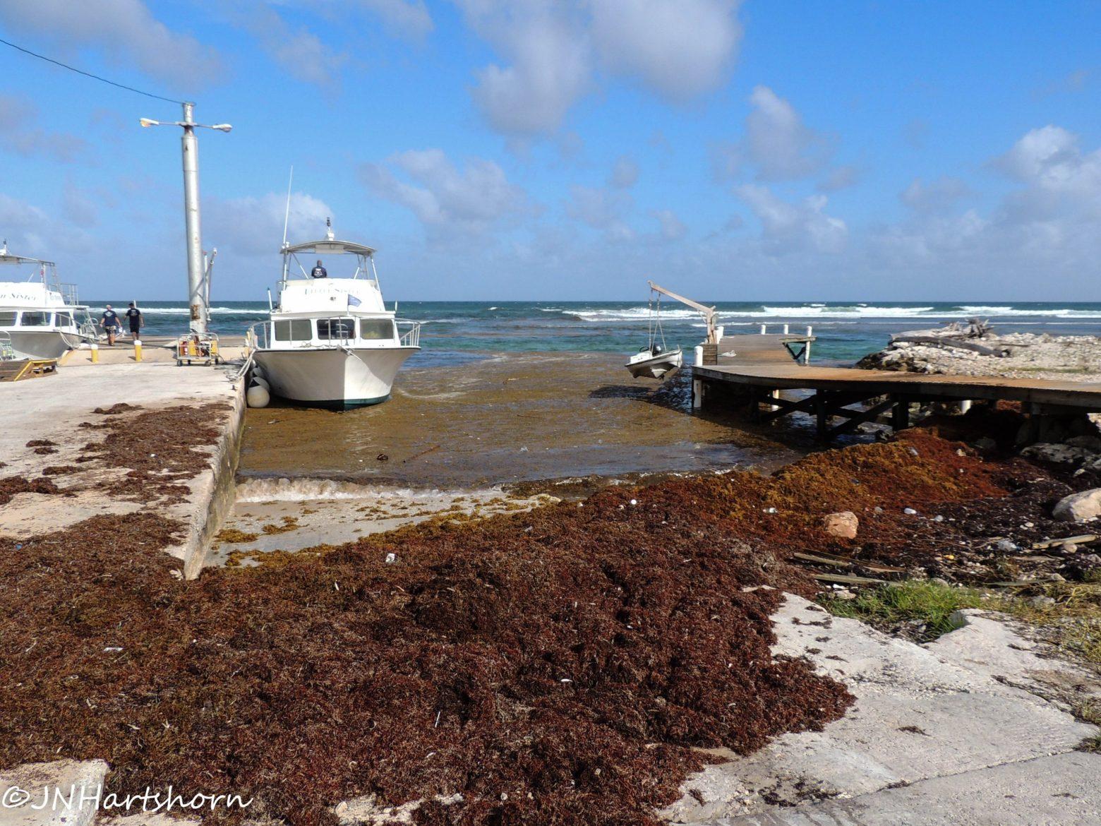 sargassum in 2019