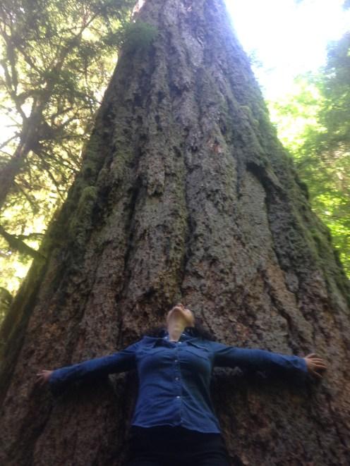 IMG_0480 BIG TREE