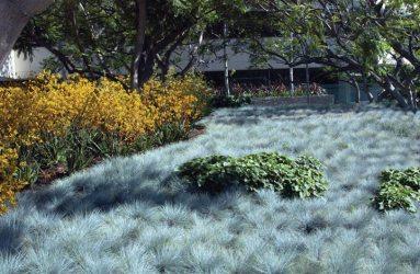 Pamela Burton, Colorado Center, Santa Monica