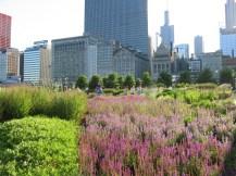 Gustafson Guthrie Nichol; The Lurie Garden, Millennium Park, Chicago, Illinois