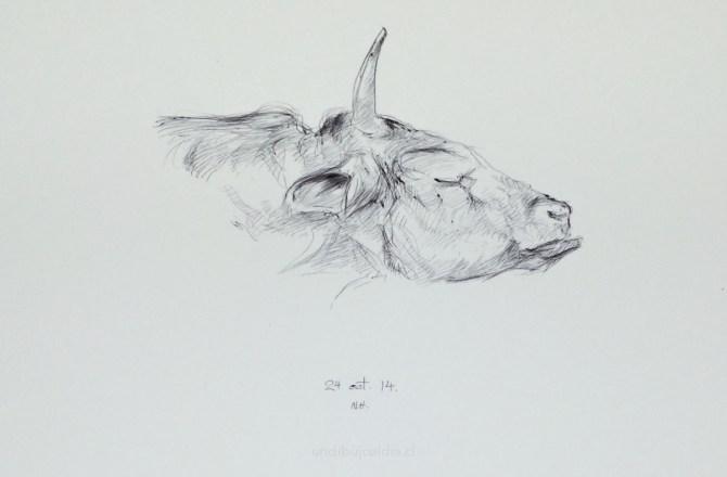 vaca de perfil