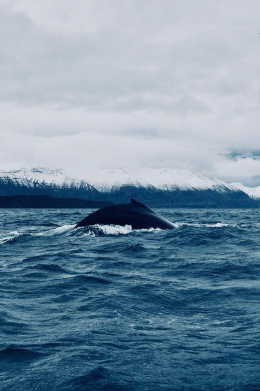 Islande, fjord de l'est