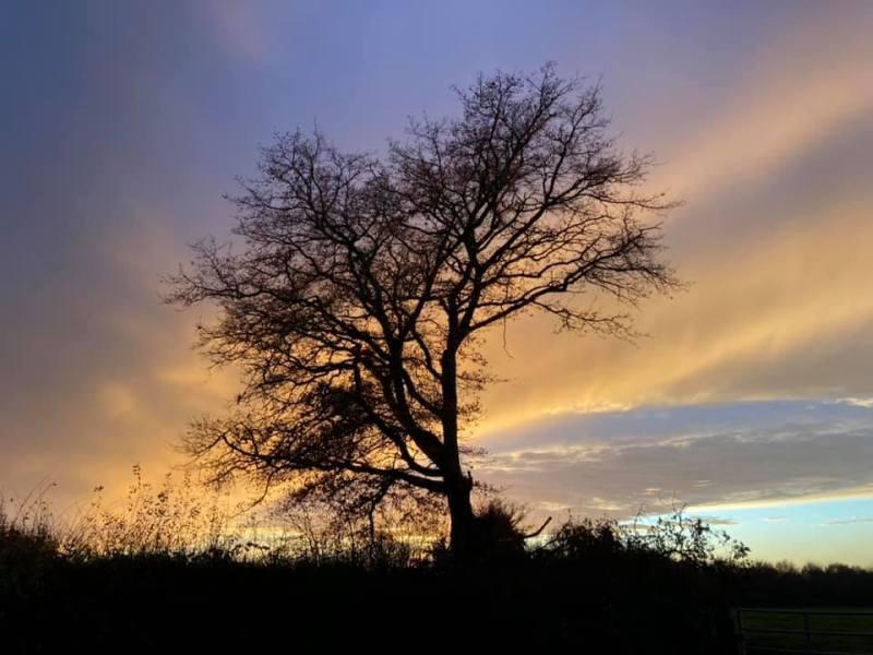 arbre splendide dans le couchant