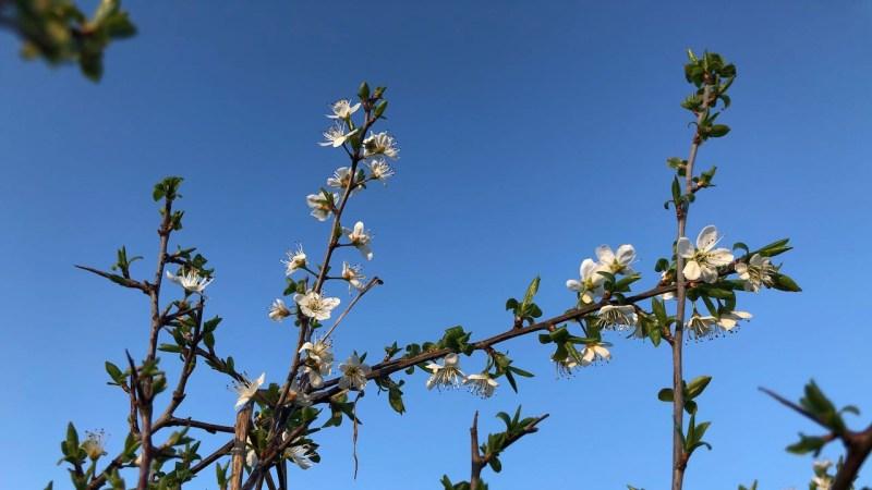 Une vie en mieux : le renouveau du printemps avec de jolies fleurs sur un ciel bleu